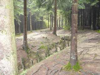 Trenches in woods at Verdun